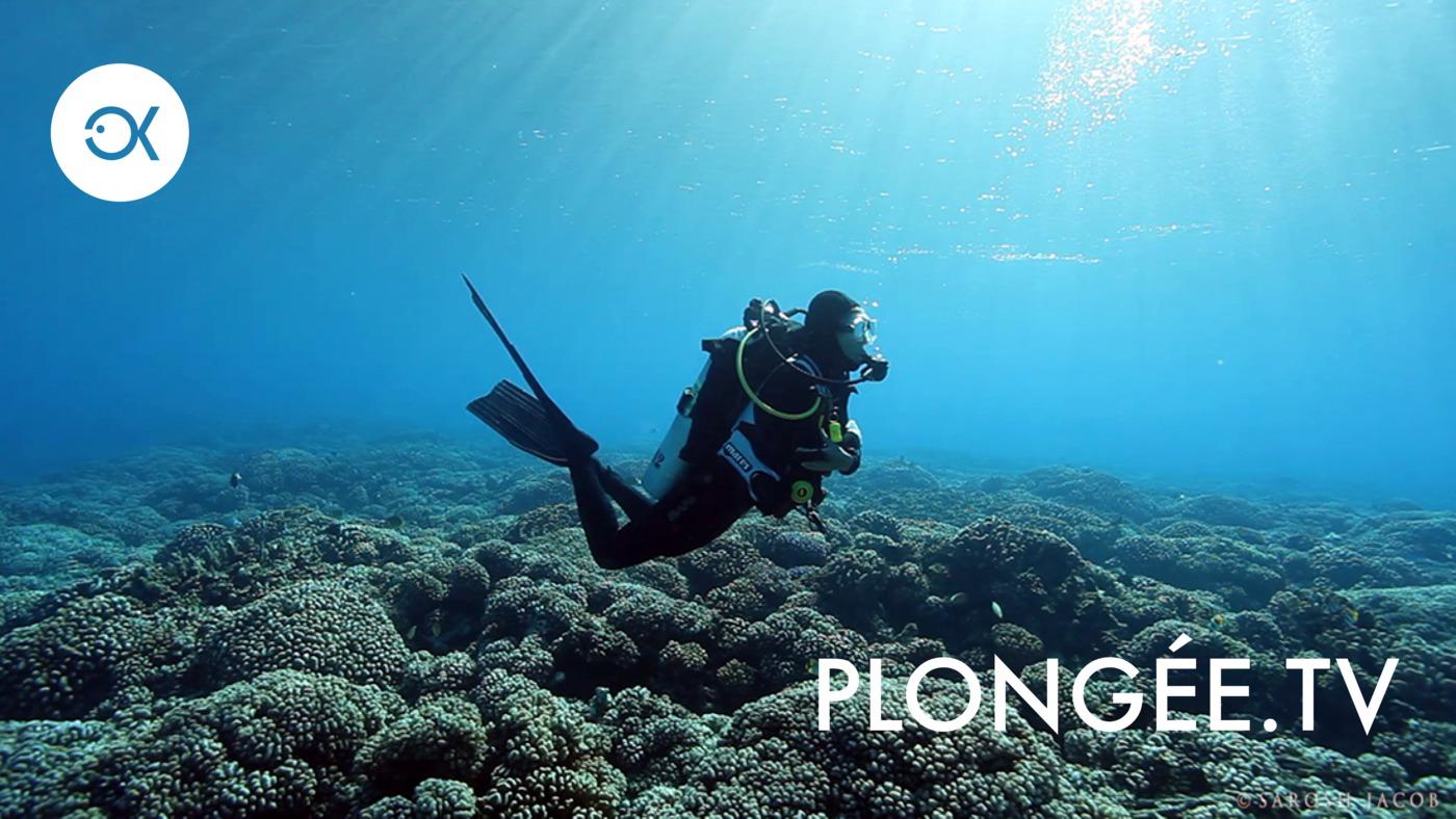 Que veut dire plongée sous-marine en anglais